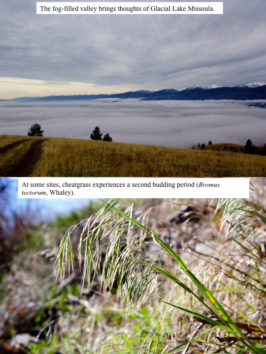 The fog-filled valley brings thoughts of Glacial Lake Missoula.
