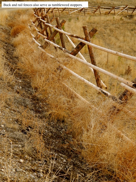 Buck and rail fences also serve as tumbleweed stoppers.