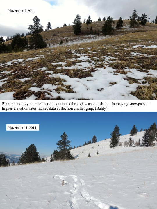 Plant phenology data collection continues through seasonal shifts. Increasing snowpack at higher elevation sites makes data collection challenging. (Baldy)