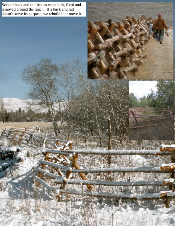 Several buck and rail fences were built, fixed and removed around the ranch. If a buck and rail doesn't serve its purpose, we rebuild it or move it.