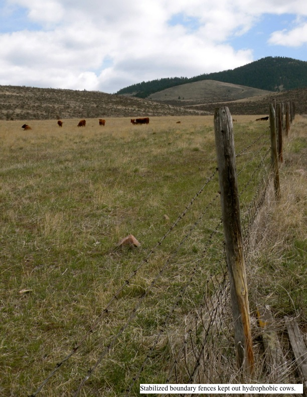 Stabilized boundary fences kept out hydrophobic cows.
