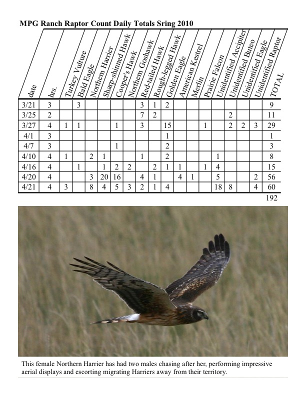 Raptor count totals