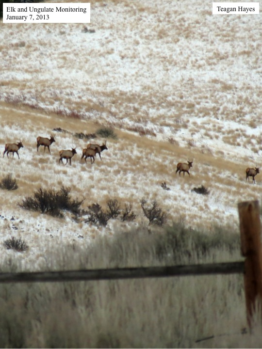 01-07-13 Elk Monitoring
