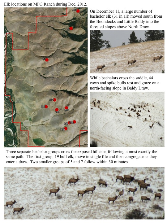 Elk locations on MPG Ranch during Dec. 2012.