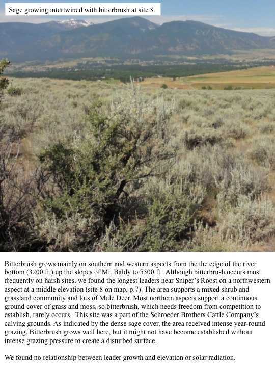 Although bitterbrush occurs most frequently on harsh sites, we found the longest leaders near Sniper's Roost on a northwestern aspect at a middle elevation.
