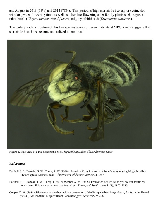 Non-native Starthistle Bee (Megachile apicalis) Update References