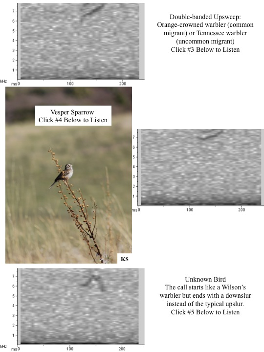 Warbler, Vesper Sparrows and unknown bird spectograms and audio.