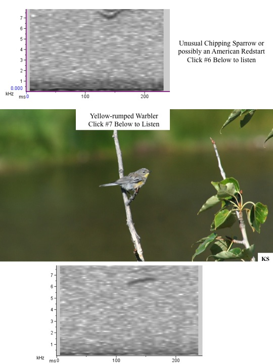 Chipping Sparrow and Yellow Rumped Warbler spectogram and audio.