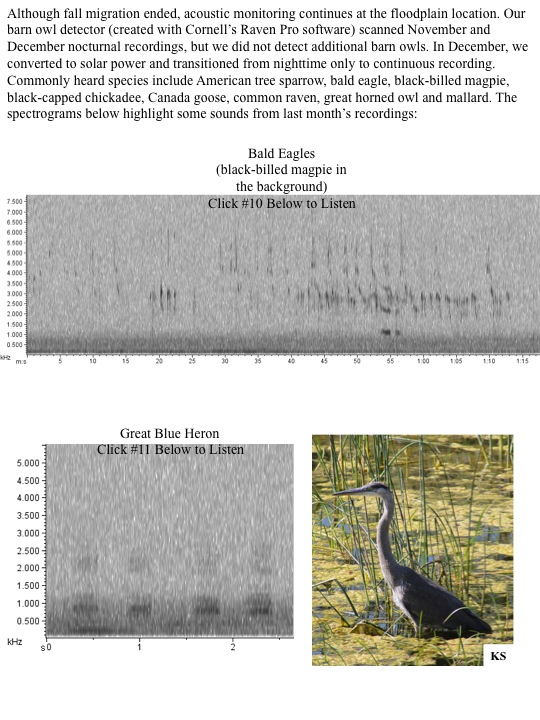 Bald eagles and magpies spectograms and audio.