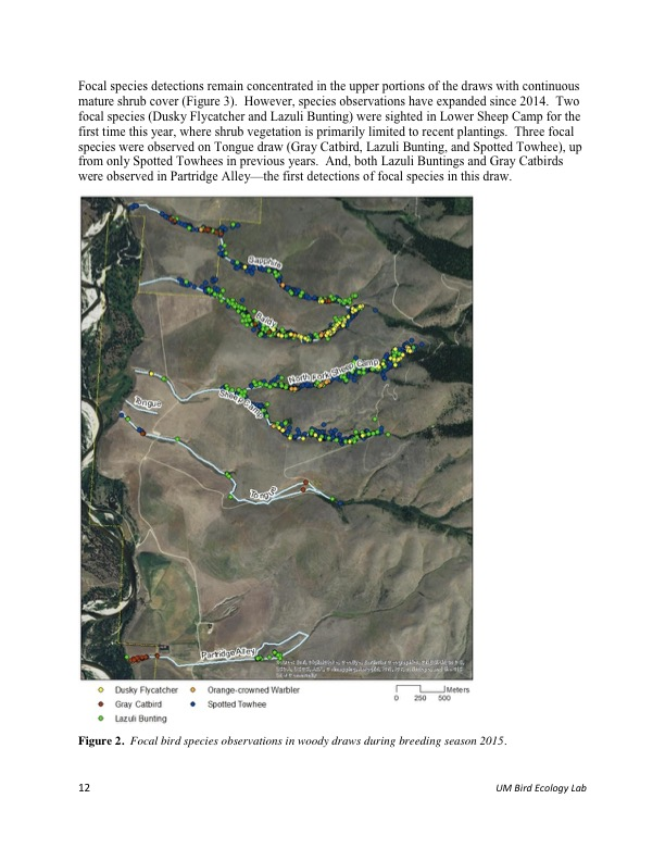 Focal species detections remain concentrated in the upper portions of the draws with continuous mature shrub cover (Figure 3). However, species observations have expanded since 2014. Two focal species (Dusky Flycatcher and Lazuli Bunting) were sighted in Lower Sheep Camp for the first time this year, where shrub vegetation is primarily limited to recent plantings. Three focal species were observed on Tongue draw (Gray Catbird, Lazuli Bunting, and Spotted Towhee), up from only Spotted Towhees in previous years. And, both Lazuli Buntings and Gray Catbirds were observed in Partridge Alley—the first detections of focal species in this draw.
