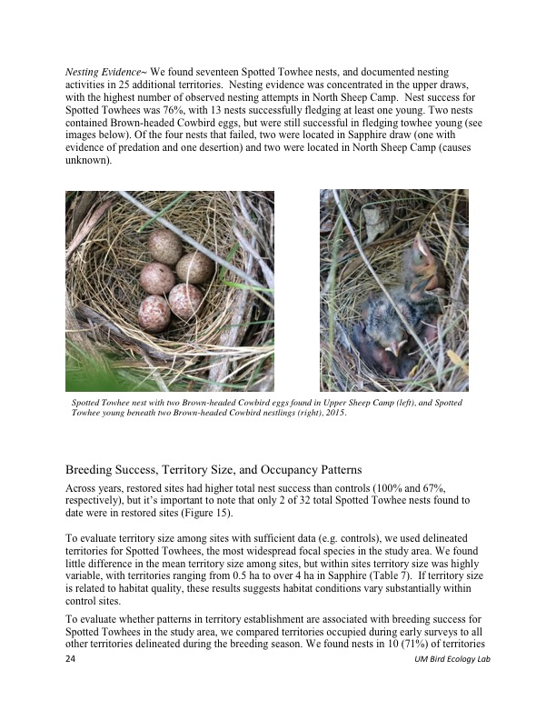 Nesting Evidence~ We found seventeen Spotted Towhee nests, and documented nesting activities in 25 additional territories. Nesting evidence was concentrated in the upper draws, with the highest number of observed nesting attempts in North Sheep Camp. Nest success for Spotted Towhees was 76%, with 13 nests successfully fledging at least one young. Two nests contained Brown-headed Cowbird eggs, but were still successful in fledging towhee young (see images below). Of the four nests that failed, two were located in Sapphire draw (one with evidence of predation and one desertion) and two were located in North Sheep Camp (causes unknown).