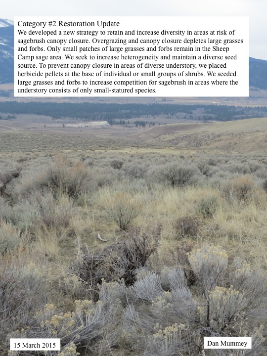 We developed a new strategy to retain and increase diversity in areas at risk of sagebrush canopy closure. Overgrazing and canopy closure depletes large grasses and forbs. Only small patches of large grasses and forbs remain in the Sheep Camp sage area. We seek to increase heterogeneity and maintain a diverse seed source. To prevent canopy closure in areas of diverse understory, we placed herbicide pellets at the base of individual or small groups of shrubs. We seeded large grasses and forbs to increase competition for sagebrush in areas where the understory consists of only small-statured species.