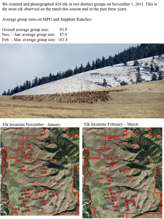elk group size & locations