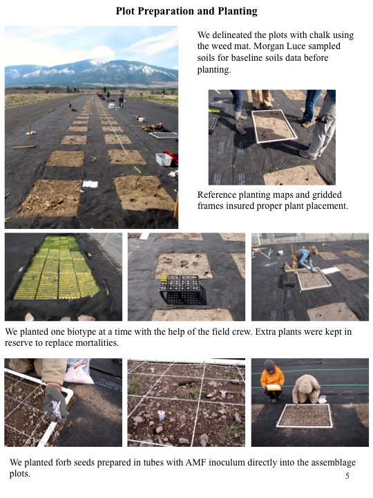 We delineated the plots with chalk using the weed mat. Morgan Luce sampled soils for baseline soils data before planting.