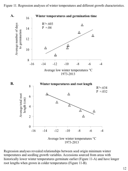 Regression analyses revealed relationships between seed origin minimum winter temperatures and seedling growth variables. Accessions sourced from areas with historically lower winter temperatures germinate earlier (Figure 11-A) and have longer root lengths when grown in colder temperatures (Figure 11-B).