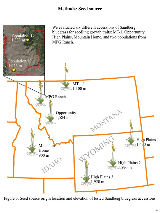 We evaluated six different accessions of Sandberg bluegrass for seedling growth traits: MT-1, Opportunity, High Plains, Mountain Home, and two populations from MPG Ranch.