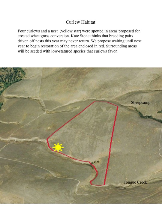 Four curlews and a nest (yellow star) were spotted in areas proposed for crested wheatgrass conversion. Kate Stone thinks that breeding pairs driven off nests this year may never return. We propose waiting until next year to begin restoration of the area enclosed in red. Surrounding areas will be seeded with low-statured species that curlews favor.