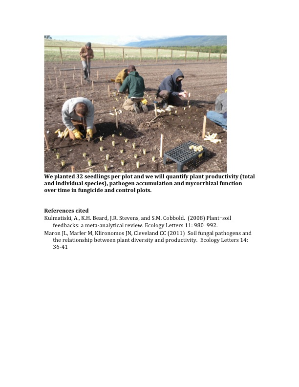 We planted 32 seedlings per plot and we will quantify plant productivity (total and individual species), pathogen accumulation and mycorrhizal function over time in fungicide and control plots.
