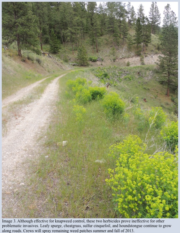 Image 3. Although effective for knapweed control, these two herbicides prove ineffective for other problematic invasives. Leafy spurge, cheatgrass, sulfur cinquefoil, and houndstongue continue to grow along roads. Crews will spray remaining weed patches summer and fall of 2013.