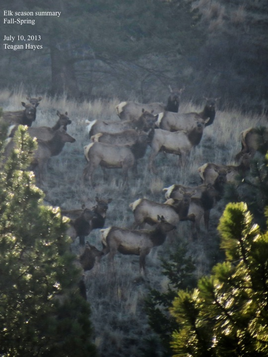 Elk Season Summary Fall Spring