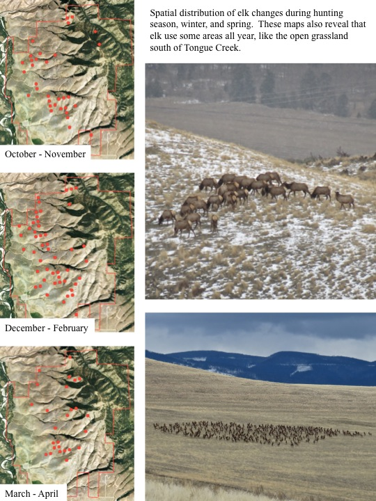 Spatial distribution of elk changes during hunting season, winter, and spring. These maps also reveal that elk use some areas all year, like the open grassland south of Tongue Creek.