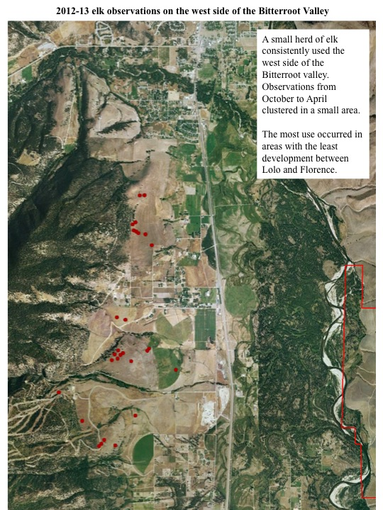 A small herd of elk consistently used the west side of the Bitterroot valley. Observations from October to April clustered in a small area. The most use occurred in areas with the least development between Lolo and Florence.