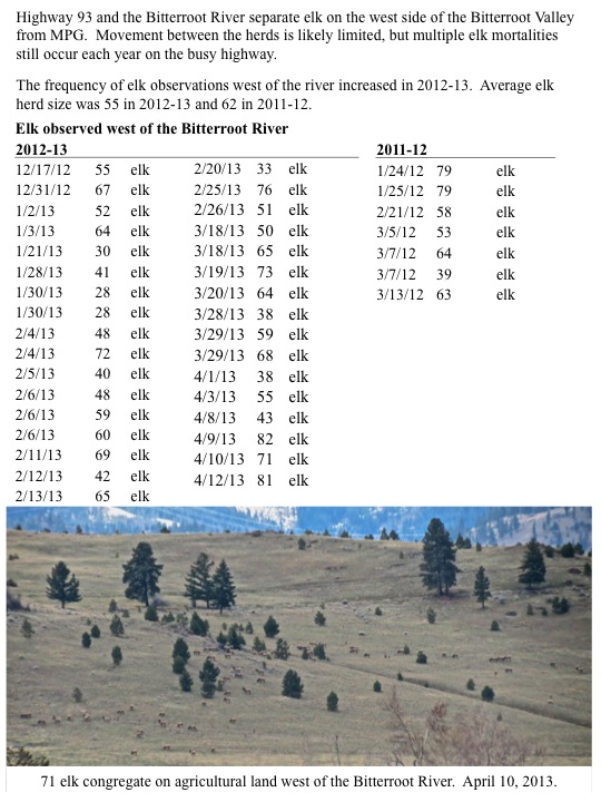 Highway 93 and the Bitterroot River separate elk on the west side of the Bitterroot Valley from MPG. Movement between the herds is likely limited, but multiple elk mortalities still occur each year on the busy highway. The frequency of elk observations west of the river increased in 2012-13. Average elk herd size was 55 in 2012-13 and 62 in 2011-12.