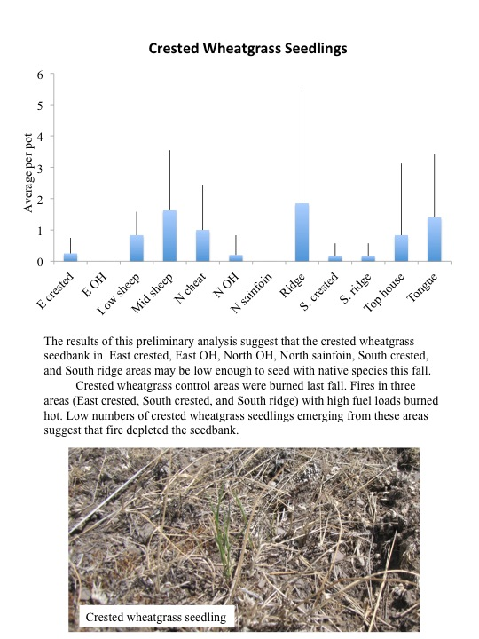 The results of this preliminary analysis suggest that the crested wheatgrass seedbank in East crested, East OH, North OH, North sainfoin, South crested, and South ridge areas may be low enough to seed with native species this fall. Crested wheatgrass control areas were burned last fall. Fires in three areas (East crested, South crested, and South ridge) with high fuel loads burned hot. Low numbers of crested wheatgrass seedlings emerging from these areas suggest that fire depleted the seedbank.