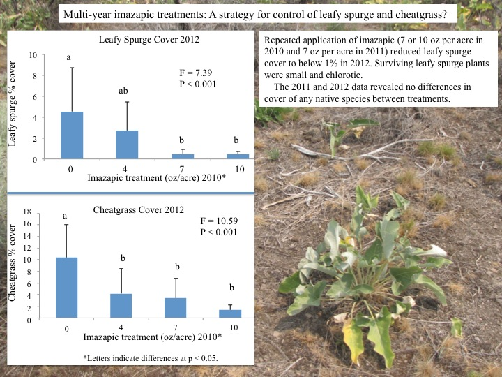 Substantial reductions of leaky spurge seen in 2012.