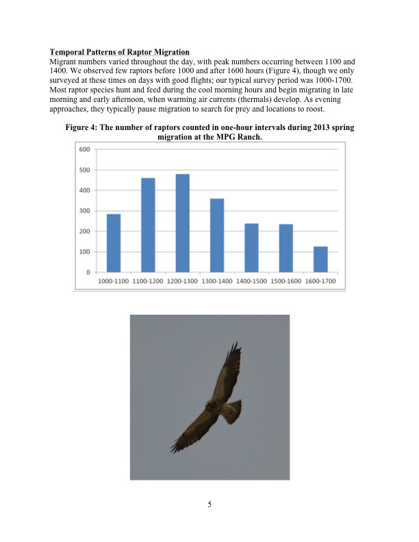 Temporal Patterns of Raptor Migration Migrant numbers varied throughout the day, with peak numbers occurring between 1100 and 1400. We observed few raptors before 1000 and after 1600 hours (Figure 4), though we only surveyed at these times on days with good flights; our typical survey period was 1000-1700. Most raptor species hunt and feed during the cool morning hours and begin migrating in late morning and early afternoon, when warming air currents (thermals) develop. As evening approaches, they typically pause migration to search for prey and locations to roost.