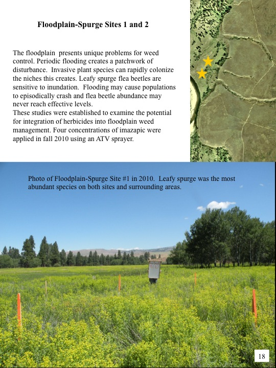 Evaluation of 2010 Treatments of Category 3 Areas: Floodplain - Spurge Sites 1 & 2