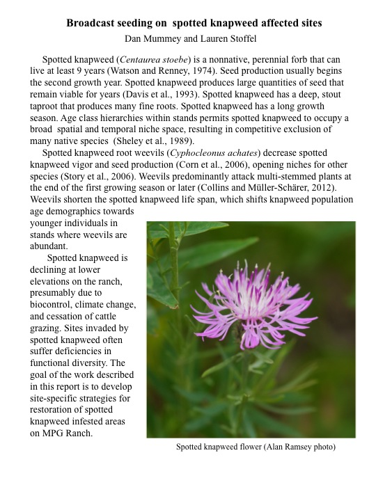 "Background on ""Broadcast Seeding of Knapweed Affected Sites"" project."