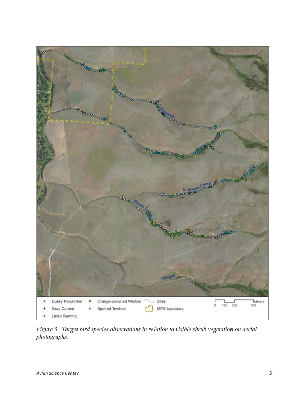 Figure 3. Target bird species observations in relation to visible shrub vegetation on aerial photographs.