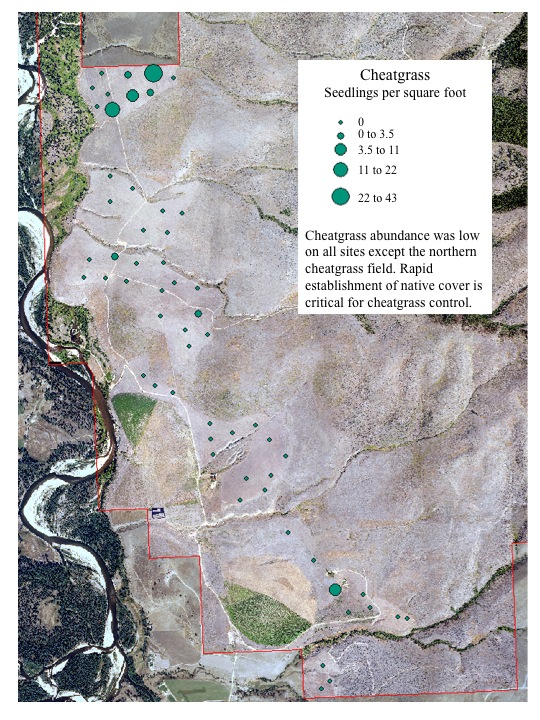 Cheatgrass abundance was low on all sites except the northern cheatgrass field. Rapid establishment of native cover is critical for cheatgrass control.