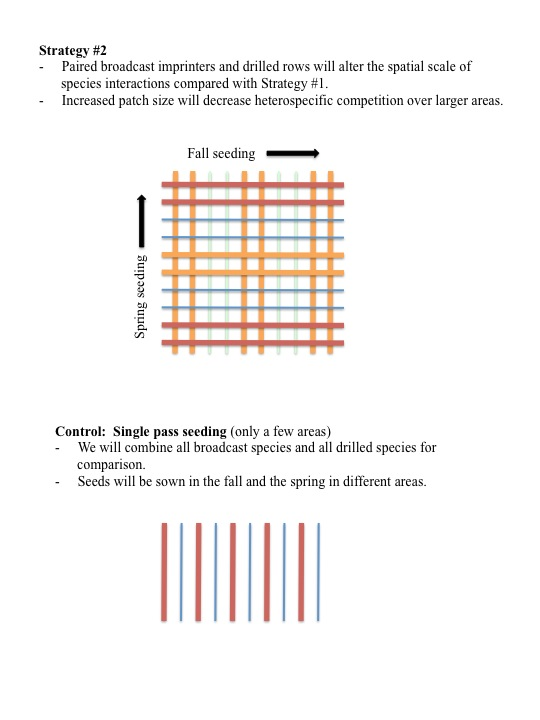 Strategy #2 - Paired broadcast imprinters and drilled rows will alter the spatial scale of species interactions compared with Strategy #1. - Increased patch size will decrease heterospecific competition over larger areas.