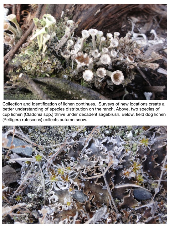 Collection and identification of lichen continues.