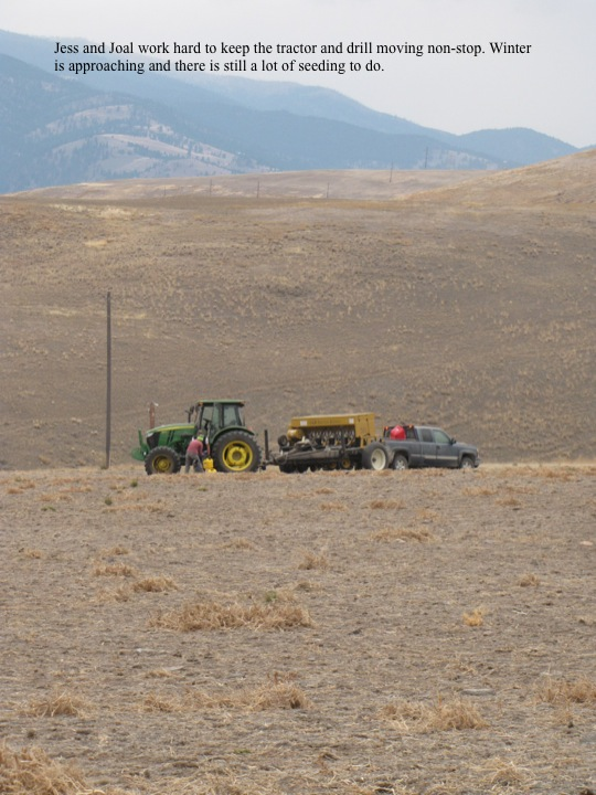 Jess and Joal work hard to keep the tractor and drill moving non-stop. Winter is approaching and there is still a lot of seeding to do.