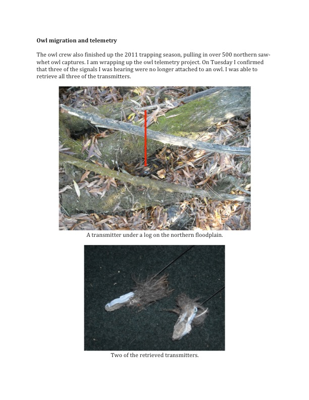 11-11-11 Raptor Migration Update: Owl Migration and Telemetry