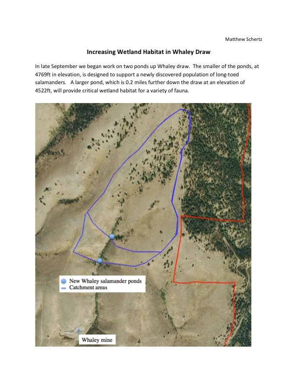 Increasing Wetland Habitat in Whaley Draw
