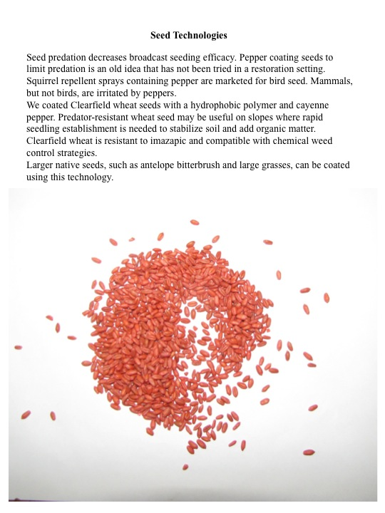 Seed predation decreases broadcast seeding efficacy. Pepper coating seeds to limit predation is an old idea that has not been tried in a restoration setting. Squirrel repellent sprays containing pepper are marketed for bird seed. Mammals, but not birds, are irritated by peppers. We coated Clearfield wheat seeds with a hydrophobic polymer and cayenne pepper. Predator-resistant wheat seed may be useful on slopes where rapid seedling establishment is needed to stabilize soil and add organic matter. Clearfield wheat is resistant to imazapic and compatible with chemical weed control strategies. Larger native seeds, such as antelope bitterbrush and large grasses, can be coated using this technology.