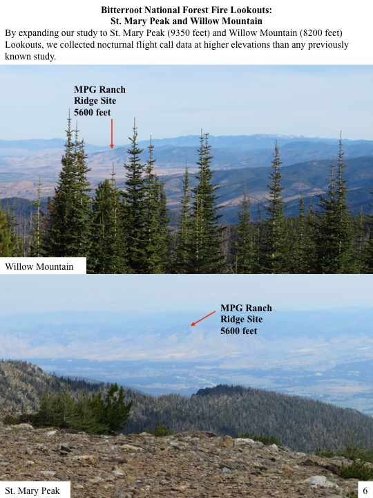 By expanding our study to St. Mary Peak (9350 feet) and Willow Mountain (8200 feet) Lookouts, we collected nocturnal flight call data at higher elevations than any previously known study.