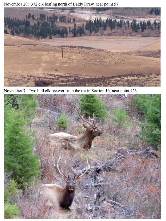 November 7: Two bull elk recover from the rut in Section 16, near point 423.