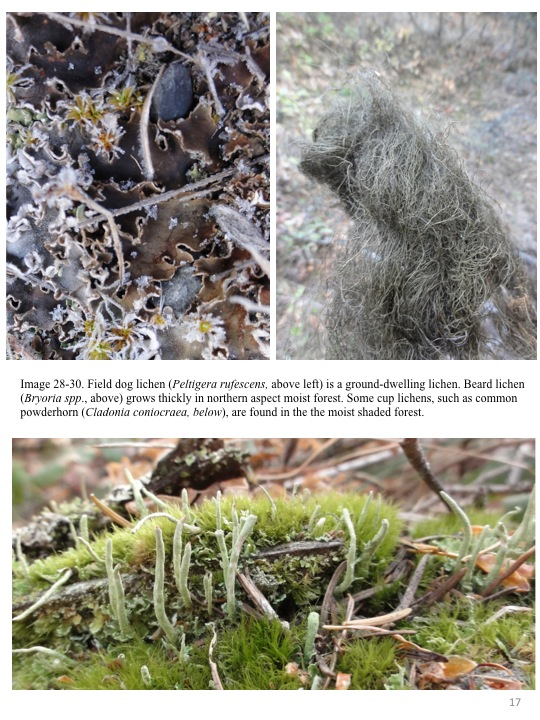 Field Dog lichen is a ground dwelling lichen.