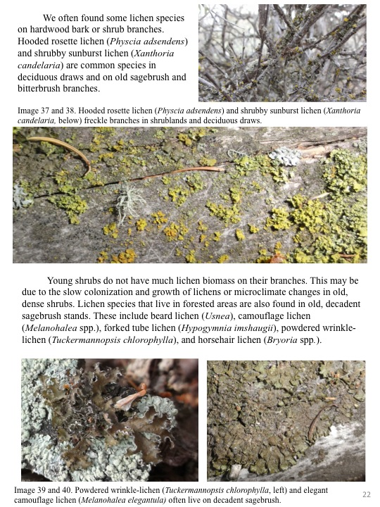 We often found some lichen species on hardwood bark or shrub branches.