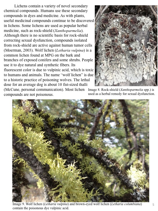 Lichens contain a variety of novel secondary chemical compounds.