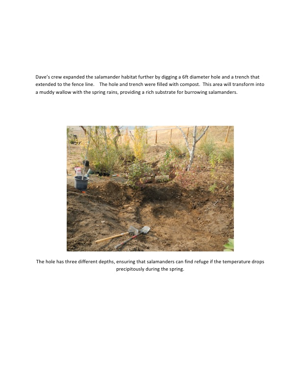 Dave's crew expanded the salamander habitat further by digging a 6ft diameter hole and a trench that extended to the fence line.