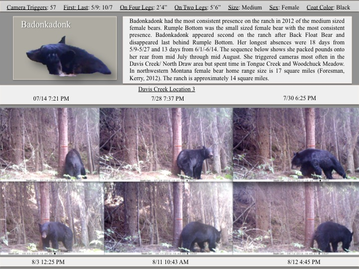 Badonkadonk had the most consistent presence on the ranch in 2012 of the medium sized female bears.