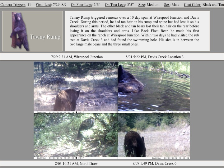 Tawny Rump triggered cameras over a 10 day span at Wirespool Junction and Davis Creek.
