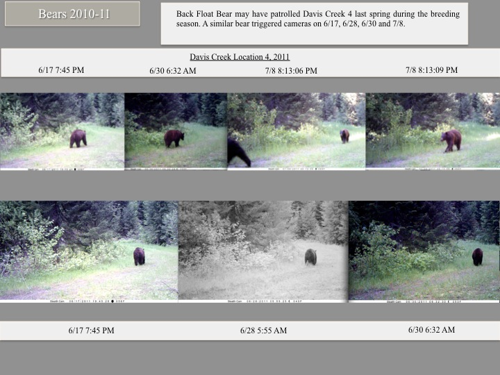 Back Float Bear may have patrolled Davis Creek 4 last spring during the breeding season.