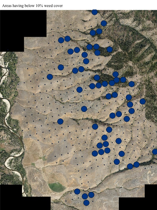 Areas with 10% weed cover.